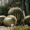 Botanischer Garten Berlin -