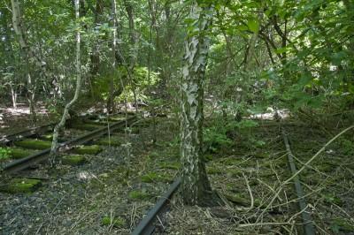Die Natur hat sich den ehemaligen Bahnhof zurückerobert.