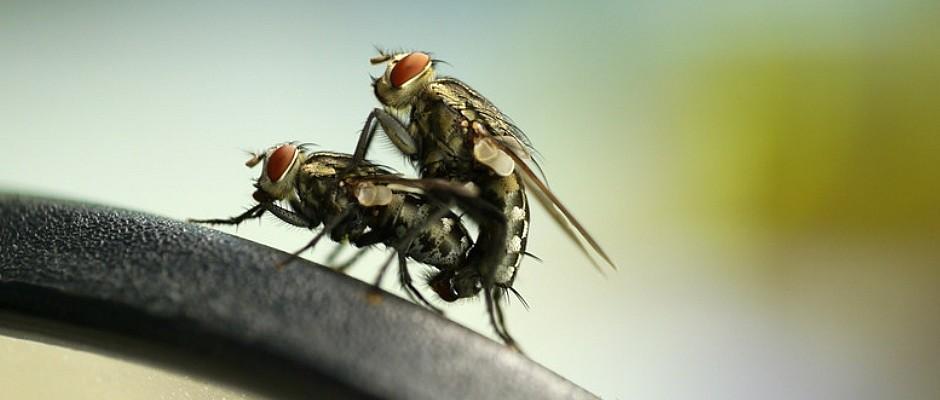 Sonderschau Fliegen im Berliner Naturkundemuseum