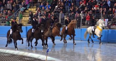 EM der Islandpferde auf Eis in Berlin