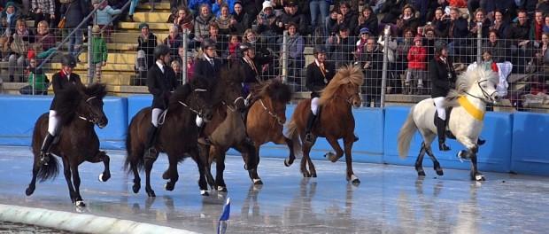 Icehorse - EM der Islandpferde auf Eis in Berlin
