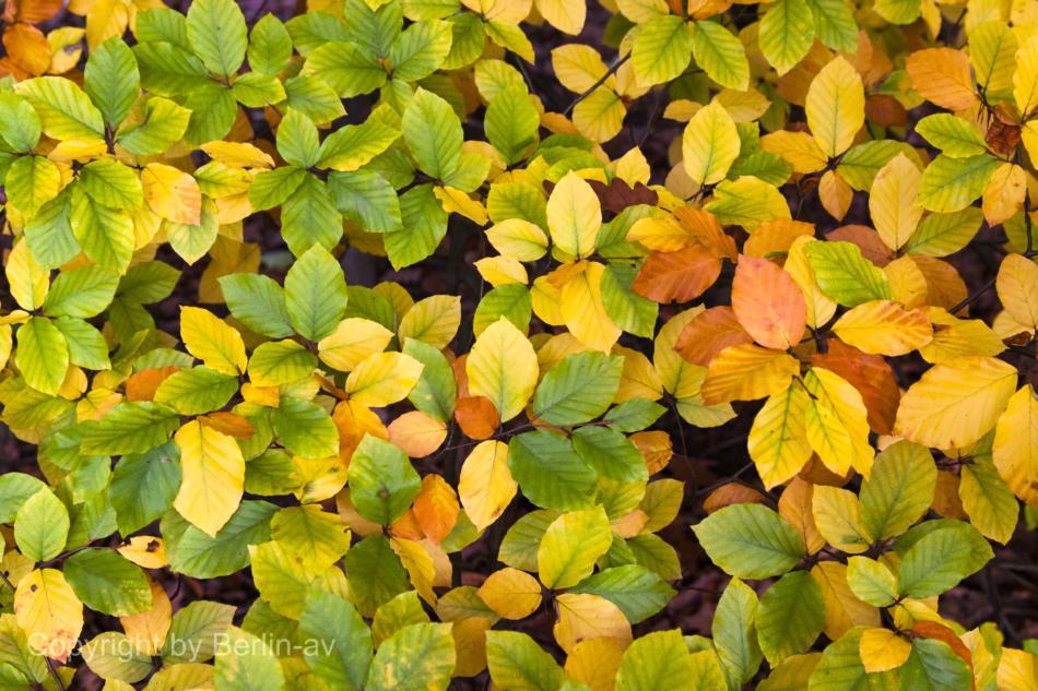 Auch bei trübem Herbstwetter können die Farben durch das diffuse Licht leuchten.