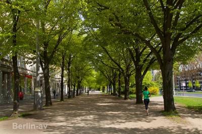 Auch schattenspendende Bäume gibt es reichlich in der Karl-Marx-Allee
