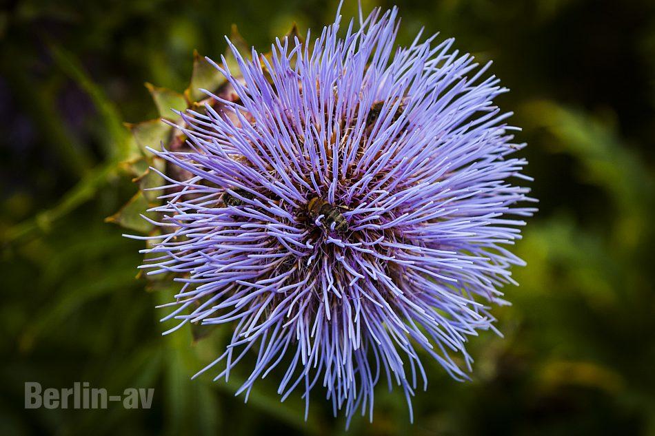 Botanischer Garten öffnungszeiten | jamgo.co