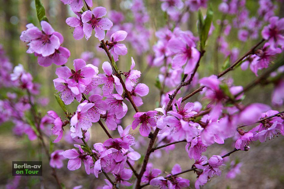 Frühlingsblüher im Naturpark Nuthe-Nieplitz