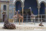 Berliner Zoo - Zoologischer Garten - Zoo Berlin
