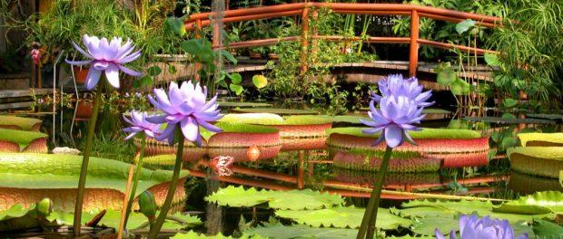 Victoriahaus von innen im Jahr 2004 - Foto: Botanischer Garten Berlin