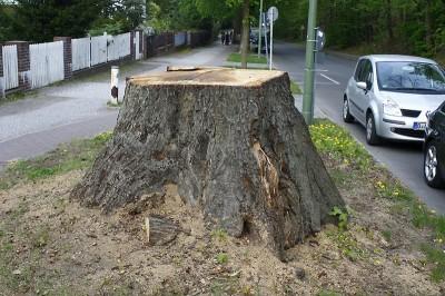 Gefällter Baum in Berlin