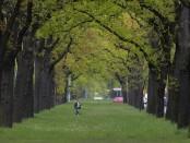 Prächtige Allee in Zehlendorf