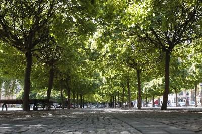 Bäume auf dem Gendarmenmarkt