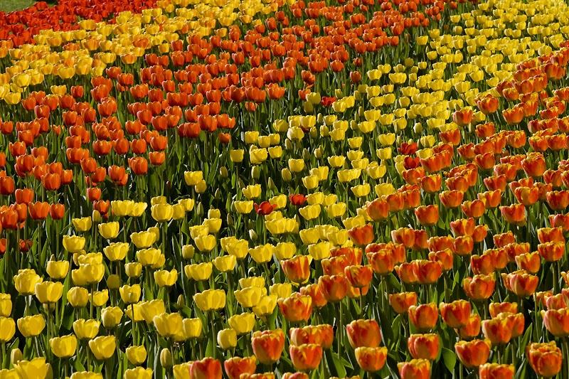 berlinav-tulipan2009-05_lbb