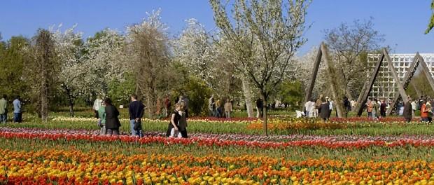 TULIPAN, Tulpenschau im Britzer Garten in Berlin