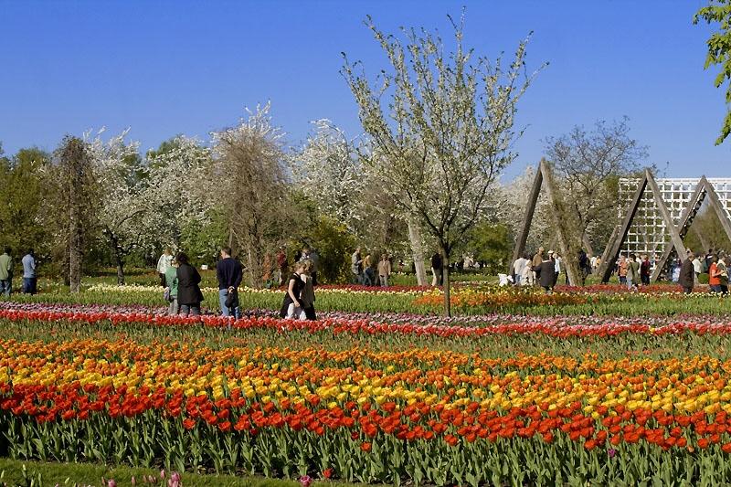 berlinav-tulipan2009-06_lbb