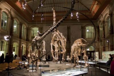 Die Saurierskelette im Naturkundemuseum Berlin