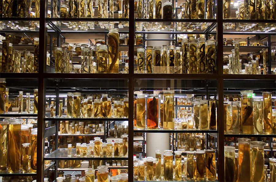 Naturkundemuseum Berlin – Nass Sammlung