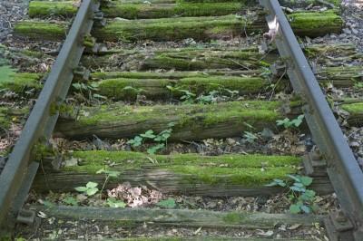 Überwucherte Gleise