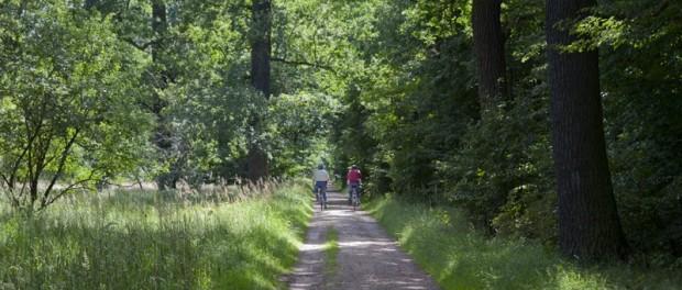 Ausflug in den Spandauer Forst