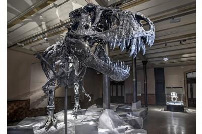 Tyrannosaurus rex Tristan im Museum für Naturkunde in Berlin. Foto Carola Radtke/Museum für Naturkunde