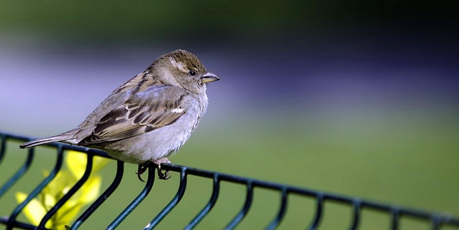 photodune-1460621-sparrow