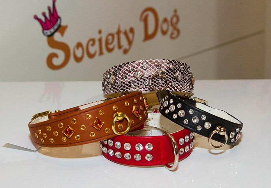 societydog_1047