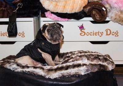 Regenmantel und Kissen von Society Dog
