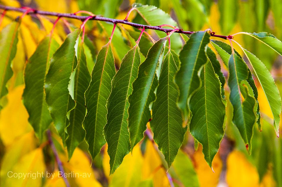Fototipp - Herbstliches Detail an einem Busch
