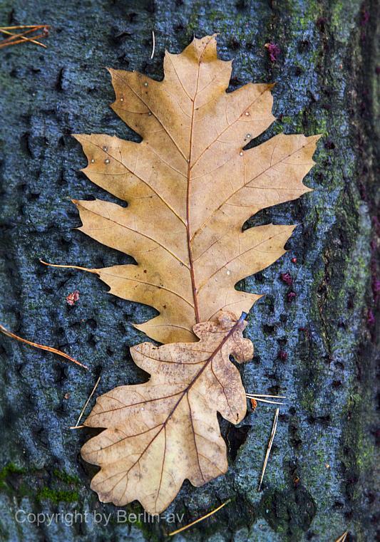 Fototipp - Herbstliches Detail, Blätter auf einem Baumstamm