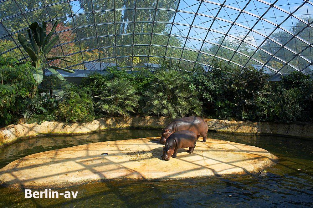 Bildergalerie Berliner Zoo Berlin Av Berichte Fotos Und Videos