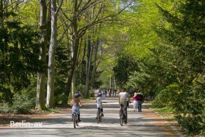 Waldzustandsbericht Berlin 2019 - Auch die Strassenbäume nicht aus dem Blick verlieren